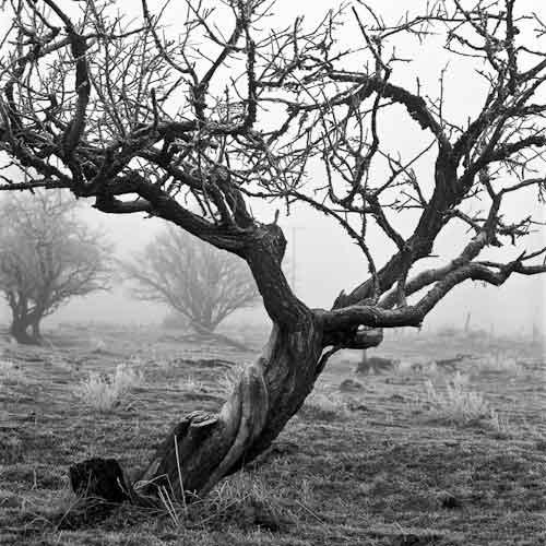 RB_tree+fog
