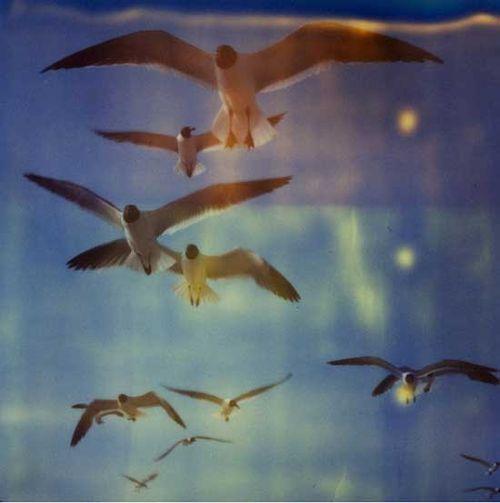 Rommel_gulls