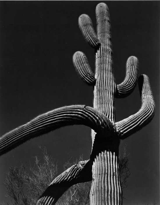 EW_Saguaro_1938_AT