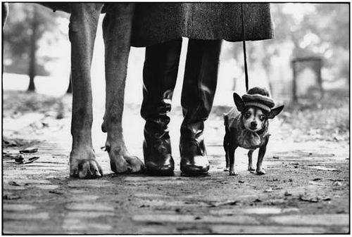 EE_Dogs_Legs_NY_1974