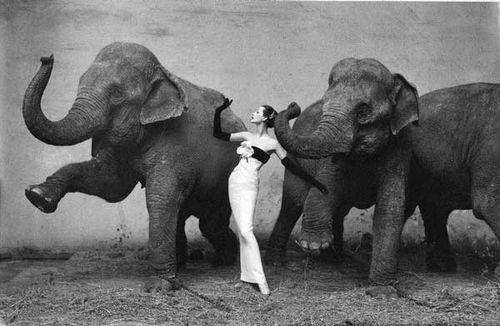 RA_Elephants