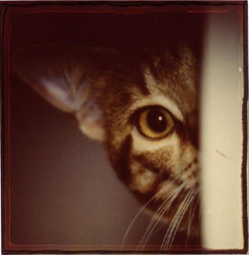 Mammana_cat