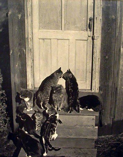 EWs_cats