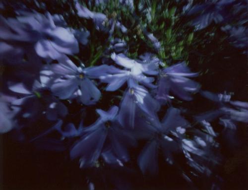 SG_purple_2014