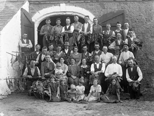 SavingTobacco_Rathmoyan_Waterford_1933