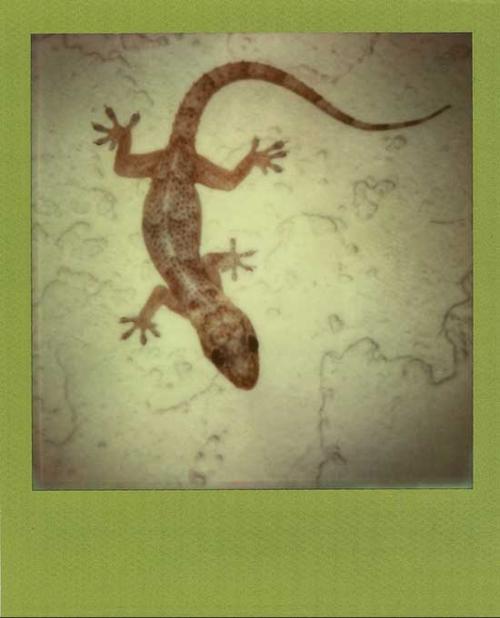 SG_gecko_2014
