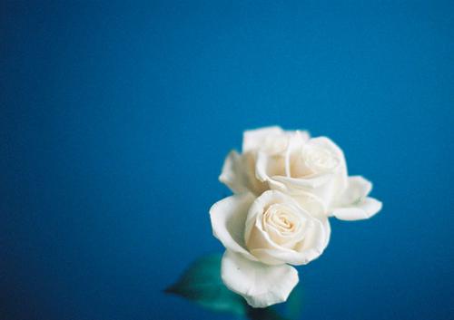 KS_roses_Aria_Portra_041115