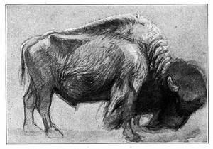 Ets_bison_6